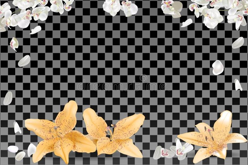 白色和黄色瓣框架在透明背景的 皇族释放例证