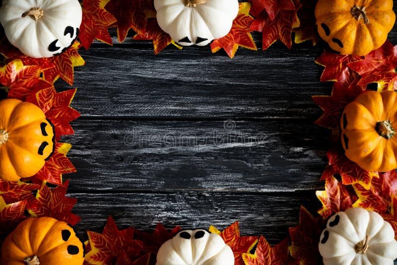 白色和黄色鬼魂南瓜顶视图与五颜六色的秋叶的 库存照片