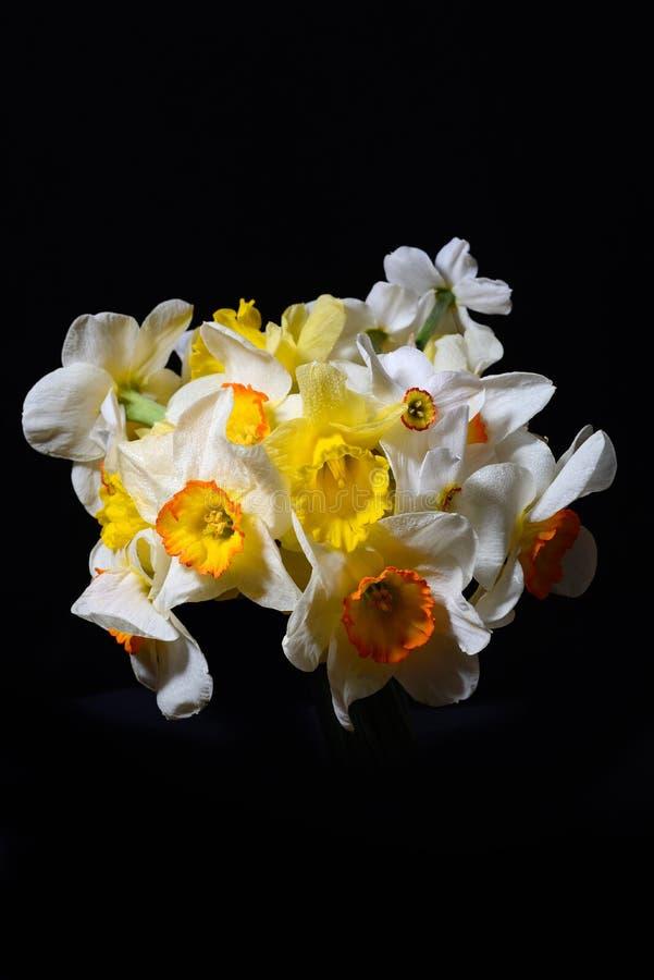 白色和黄色黄水仙花束的图片在黑backgr的 免版税库存图片