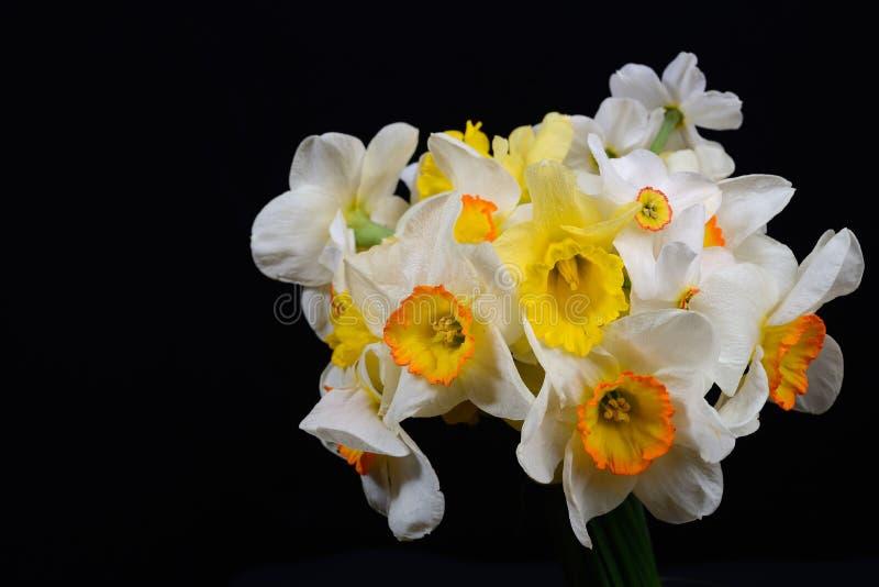 白色和黄色黄水仙花束的图片在黑backgr的 库存照片