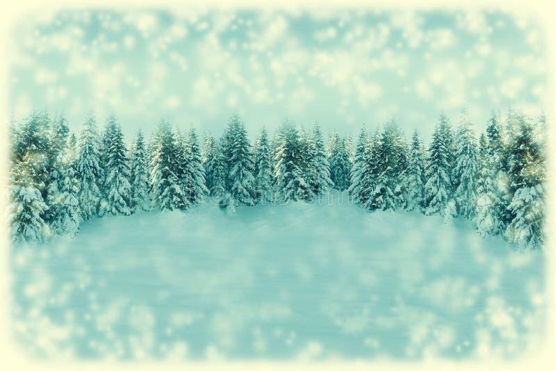 白色圣诞节贺卡背景 降雪与拷贝空间的森林风景 与冷杉木的冬天风景盖与 库存图片