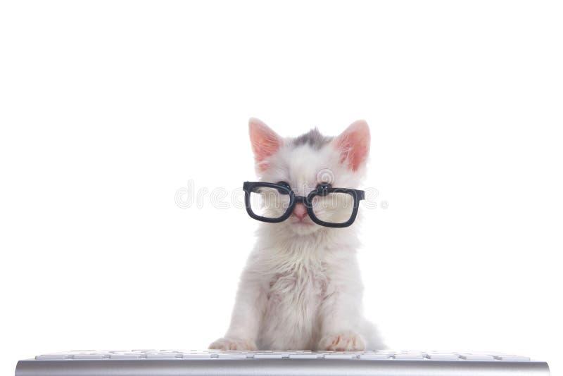 白色在键盘的小猫佩带的玻璃 免版税库存照片