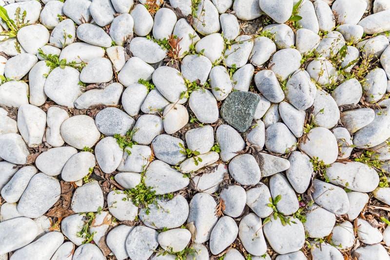 白色小卵石纹理的关闭与绿草 库存图片