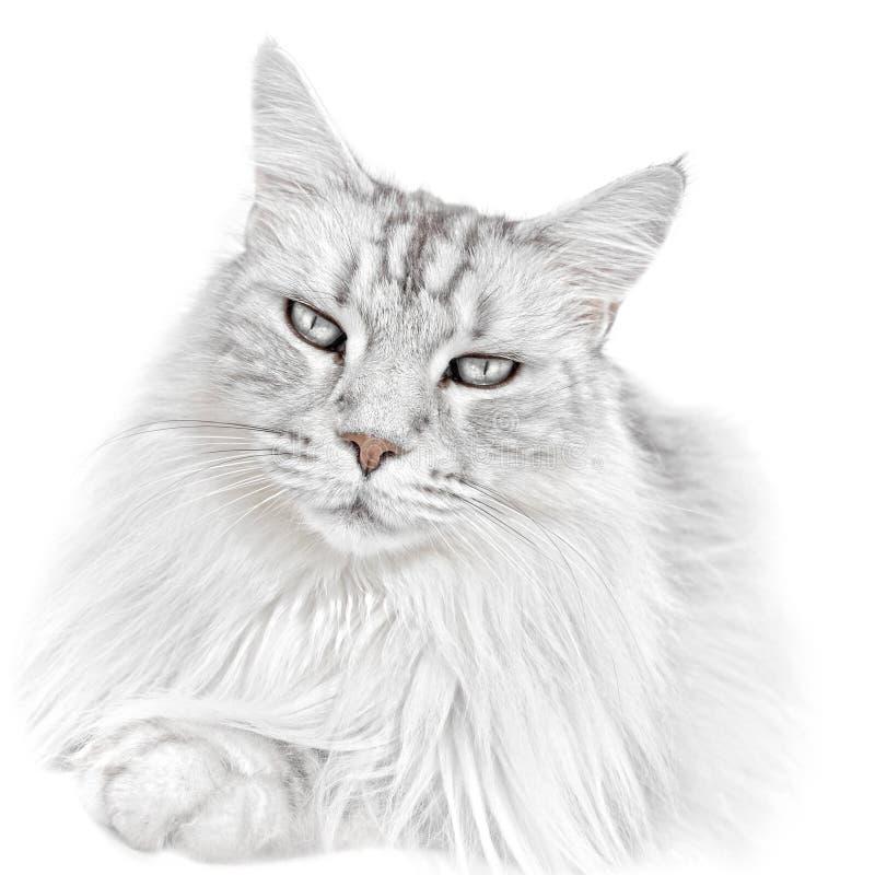 白色小猫猫 库存图片