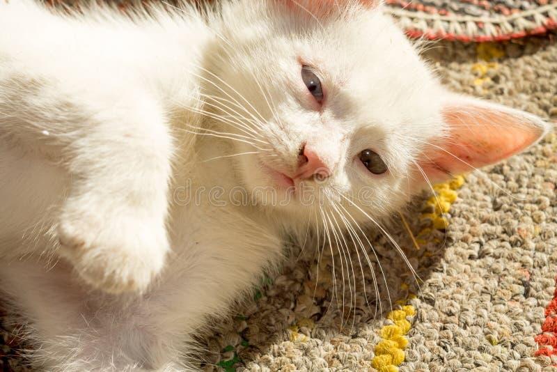 白色小猫画象 库存照片
