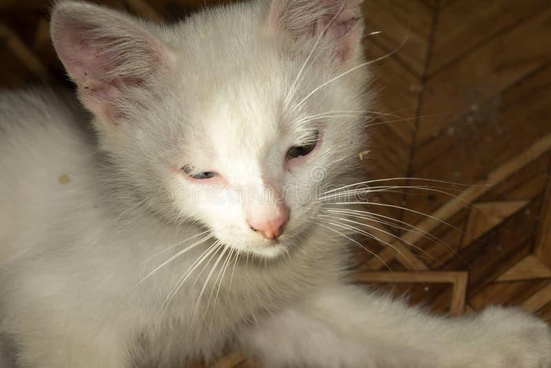 白色小猫画象 免版税图库摄影