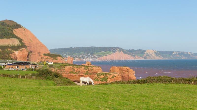 白色小马和砂岩岩石堆积Ladram海湾海滩德文郡英国英国位于在Budleigh Salterton和Sidmouth之间 库存照片