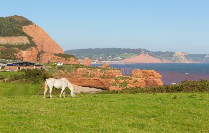 白色小马和砂岩岩石堆积Ladram海湾海滩德文郡英国英国位于在Budleigh Salterton和Sidmouth之间 免版税库存图片