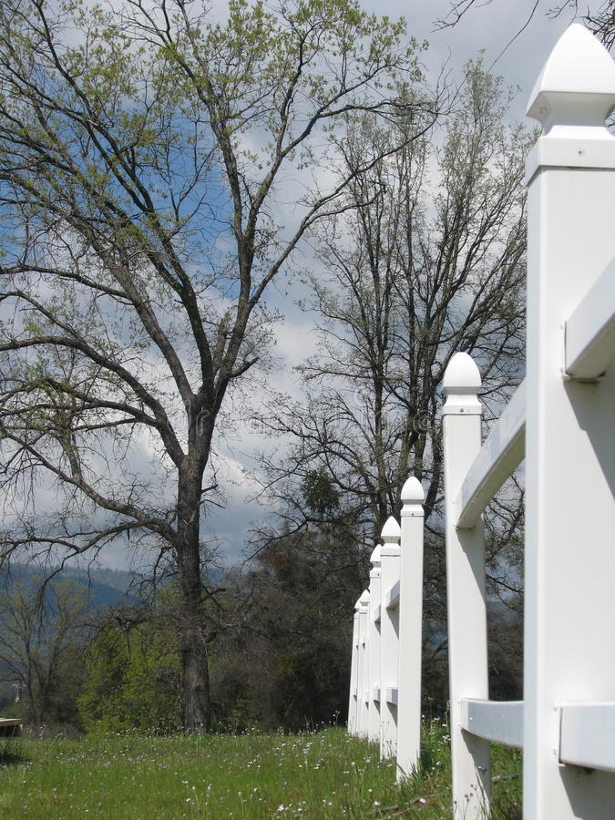 白色尖桩篱栅在沿途有树的草甸 库存图片