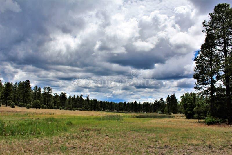 白色山自然中心, Pinetop湖边,亚利桑那,美国 免版税库存照片