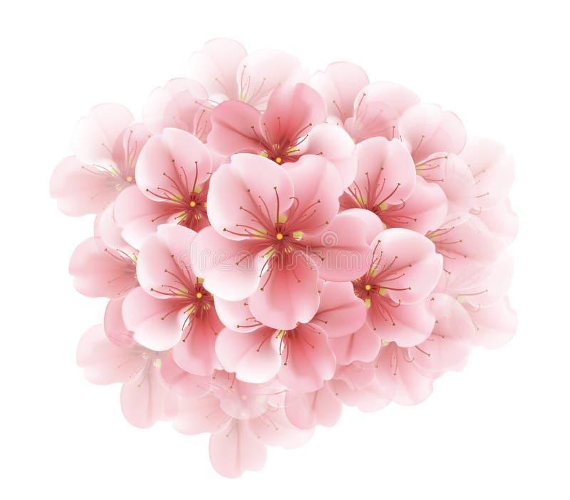 白色开花的佐仓-日本樱桃树分支  美好的开花樱桃粉红色 向量例证
