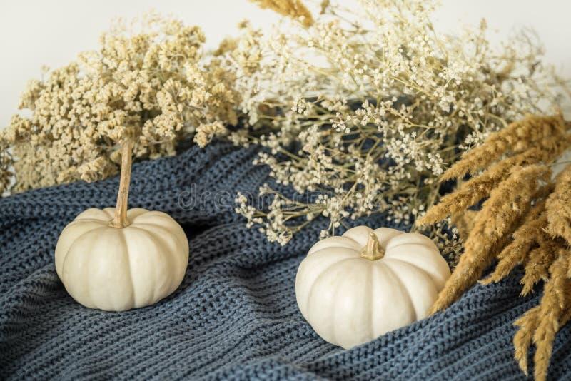 白色微型南瓜和秋天烘干了在一件舒适舒适毛线衣的花 秋天心情和静物画 库存照片