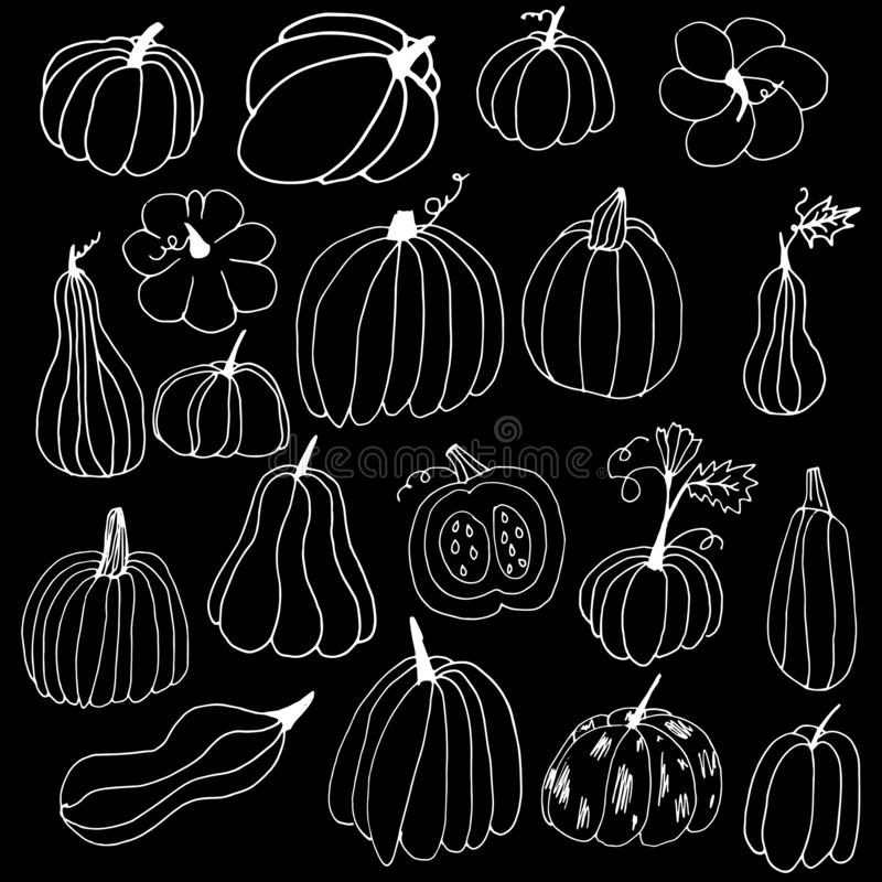 白色手绘南瓜轮廓 黑色背景中涂鸦风格的南瓜 感恩节万圣节贺卡 皇族释放例证