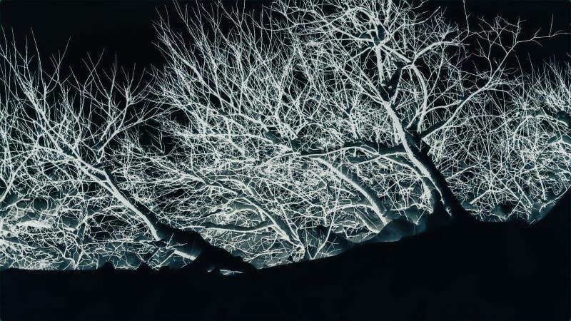白色抽象树 免版税库存图片