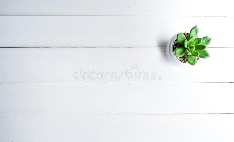 白色木桌用罐仙人掌/拷贝空间 顶视图背景 免版税库存图片