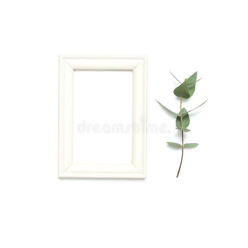 白色木相框和绿色玉树叶子在白色背景 平的位置顶视图拷贝空间 时髦最小 库存图片
