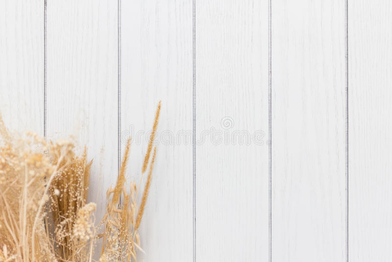 白色木纹理和干燥花背景 免版税库存图片