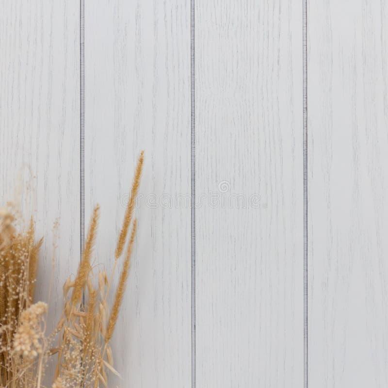 白色木纹理和干燥花背景 图库摄影