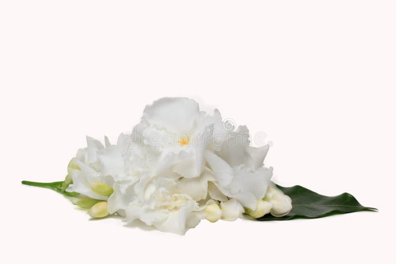 白色栀子jasminoides花美丽的花束  库存图片