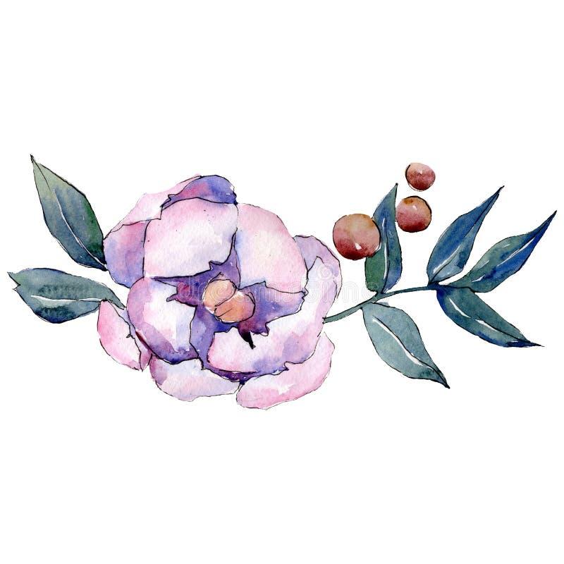 白色桃红色牡丹植物的花 被隔绝的花束例证元素 绿色叶子 背景基础设计集合水彩 库存例证