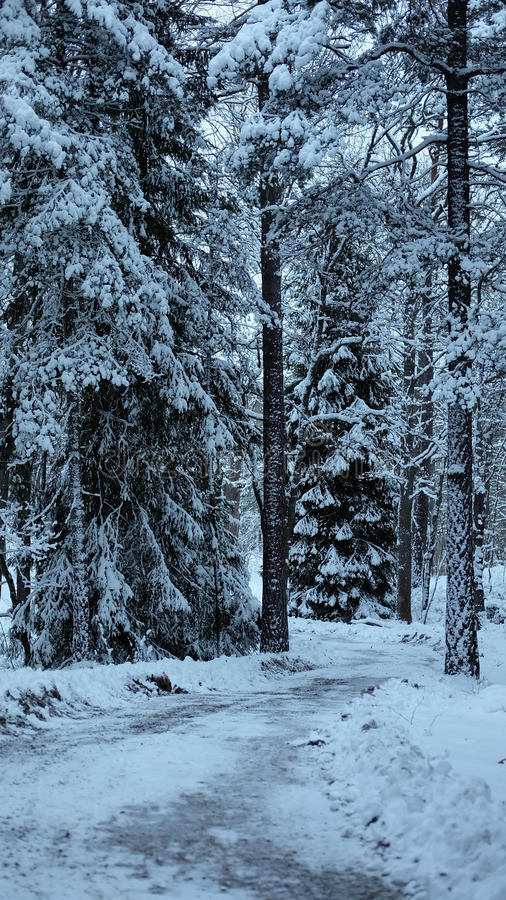 白色森林 免版税库存照片