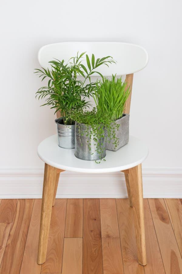 白色椅子的绿色植物 库存照片