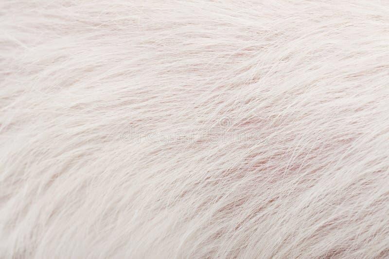 图片 包括有 头发, 本质, 方式, 抽象, 虚拟, 长毛, 干净, 自然图片