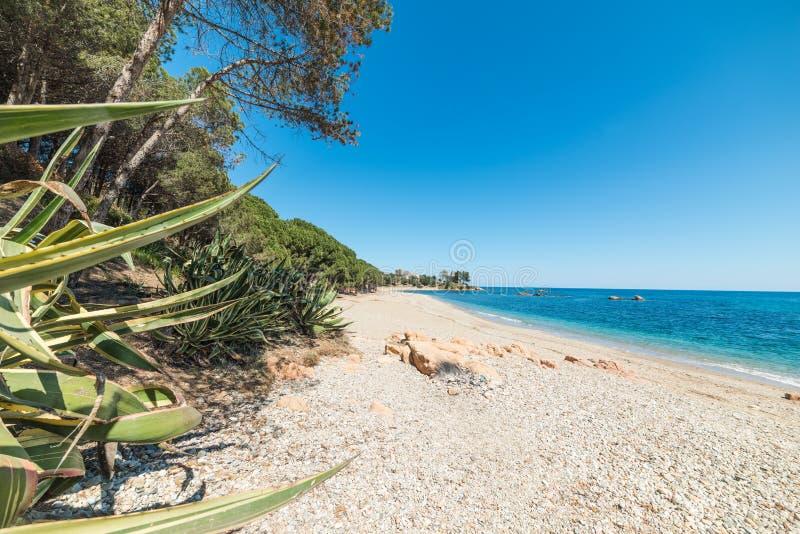 白色沙子和蓝色海在圣玛丽亚Navarrese 图库摄影
