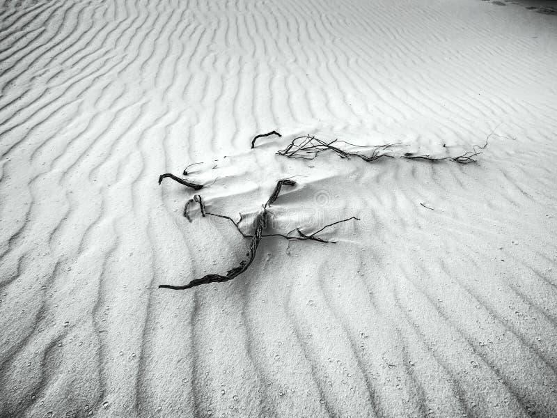 白色沙子-黑&白色的沙漠 免版税库存照片