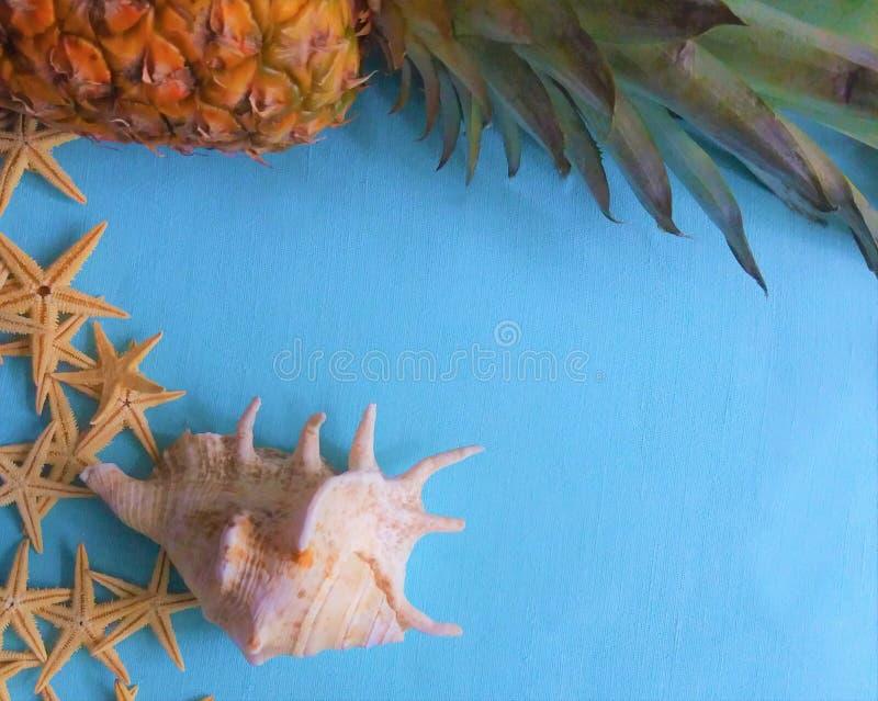 白色海星用菠萝 免版税图库摄影