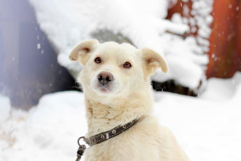 白色狗户外在冬天 免版税库存照片