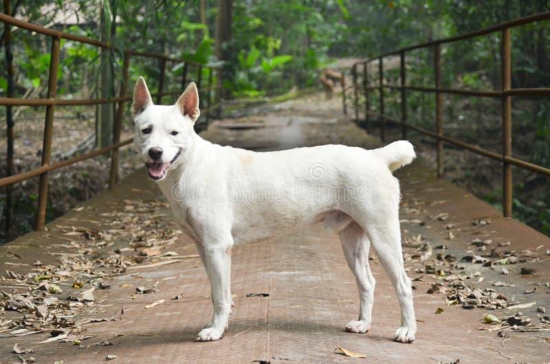 白色狗本质上 免版税库存照片