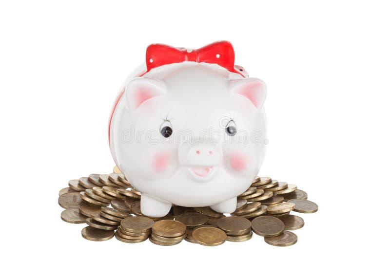 白色猪硬币箱子 库存照片