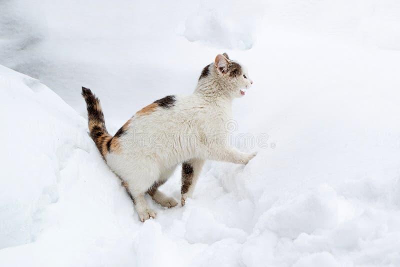 白色猫叫喊在雪,无家可归的动物在寒冷冬天 库存照片