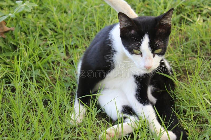 黑白色猫在庭院里 库存照片