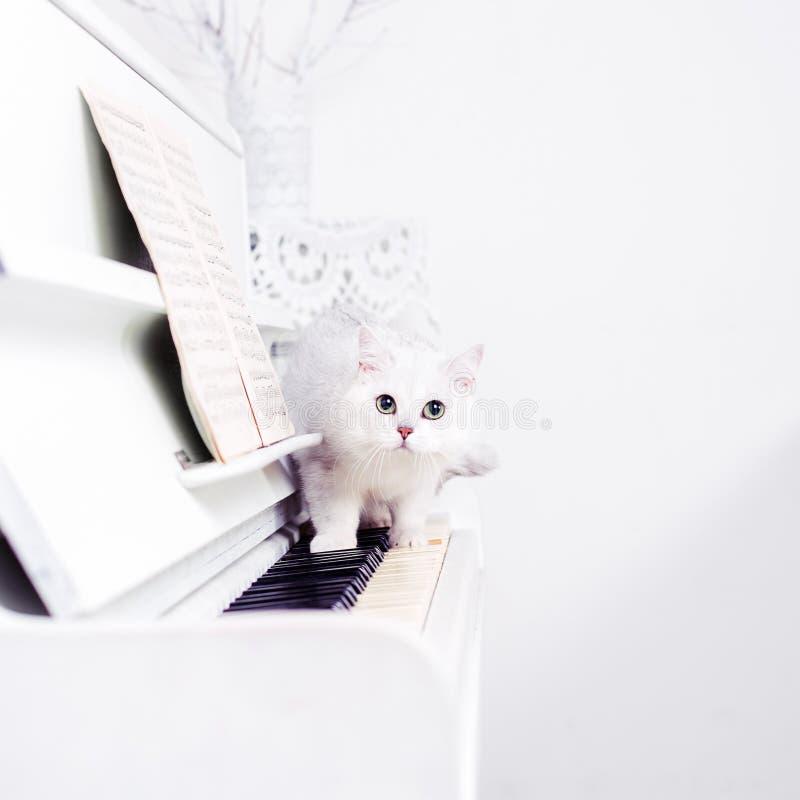 白色猫在钢琴钥匙潜逃 库存图片