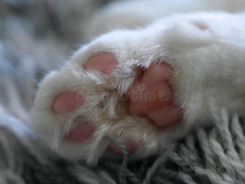 白色猫爪子 免版税库存照片