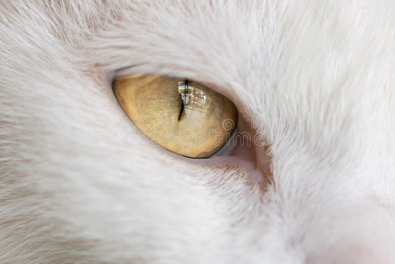 白色猫的右眼睛 图库摄影