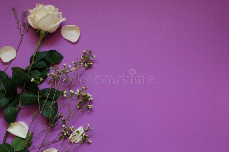 白色玫瑰和干花在紫罗兰色背景whith拷贝空间 免版税库存照片