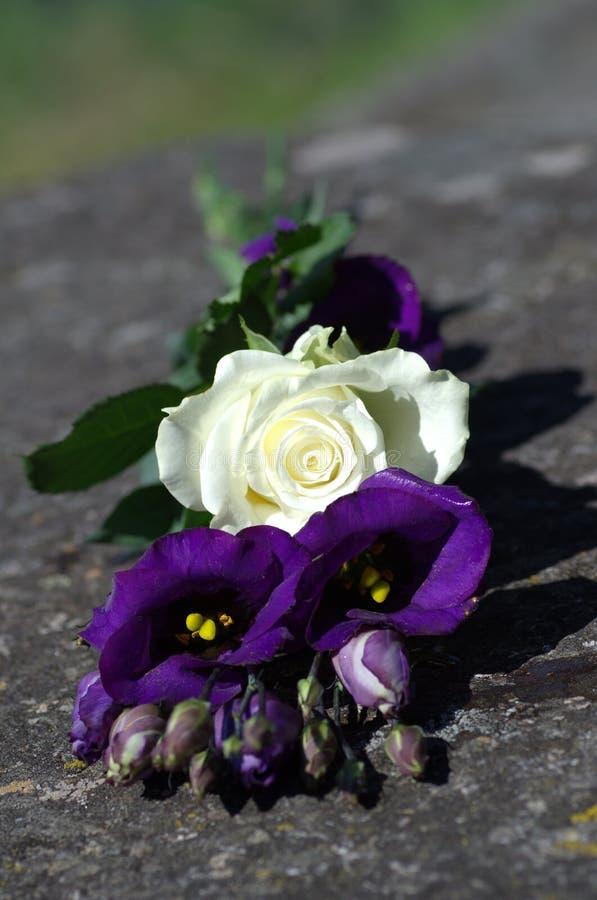 白色玫瑰和紫色沙漠百合或者也叫的大草原响铃在石头 免版税库存照片