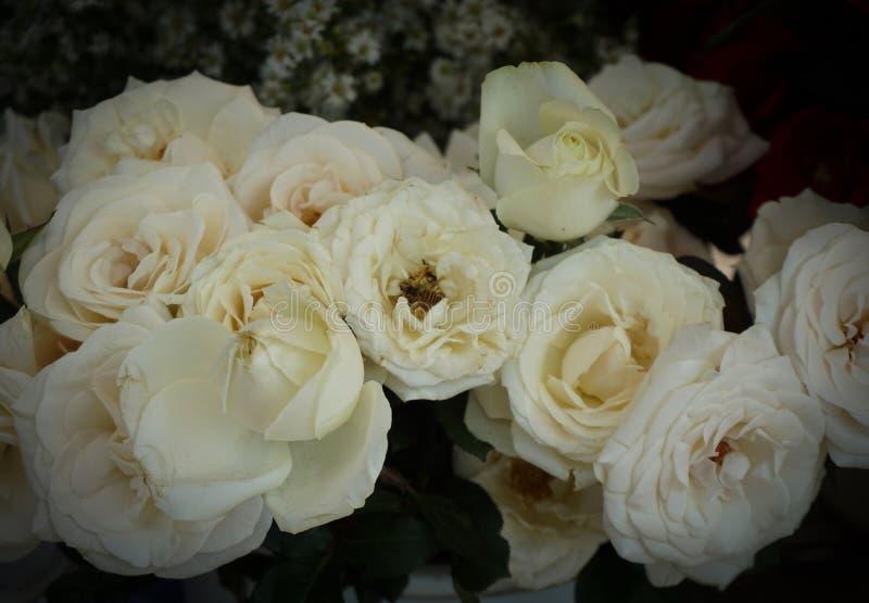 白色玫瑰在三宝垄拍的花束照片印度尼西亚 库存照片