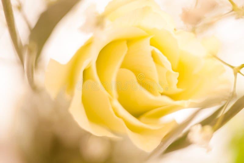 白色玫瑰摘要宏指令 免版税库存照片