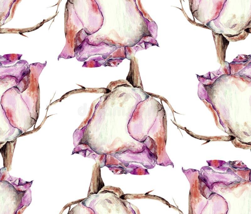 白色玫瑰,水彩,仿造无缝 库存例证