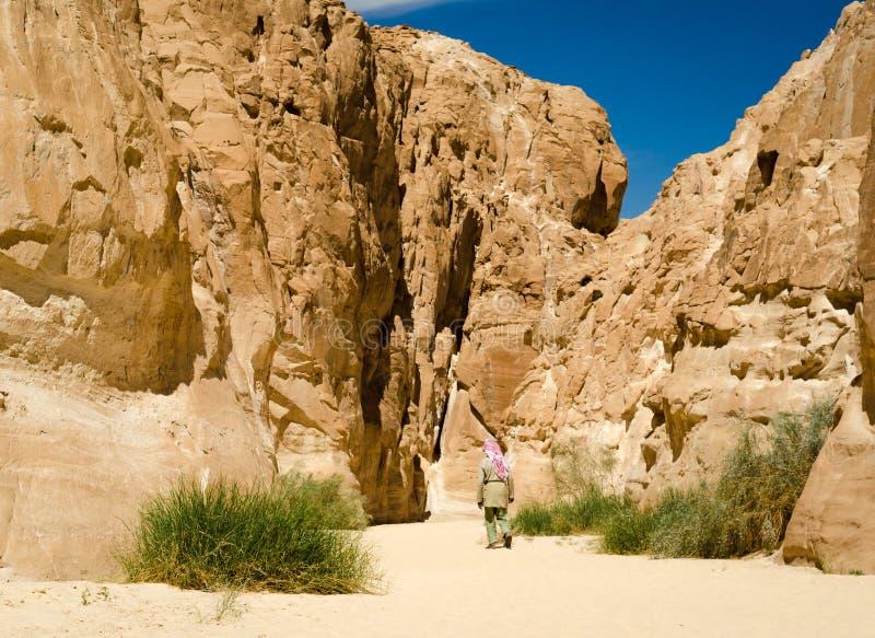 白色的流浪者在峡谷进来在岩石中的沙漠在埃及宰海卜南西奈 免版税库存照片