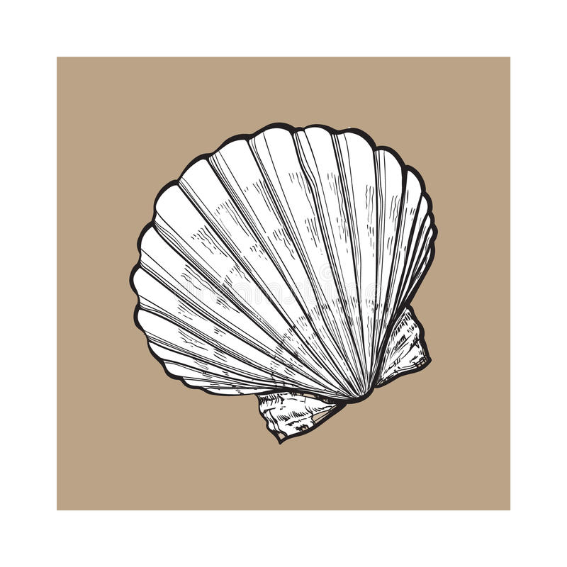 白色盐水扇贝海壳,被隔绝的剪影样式传染媒介例证 库存例证