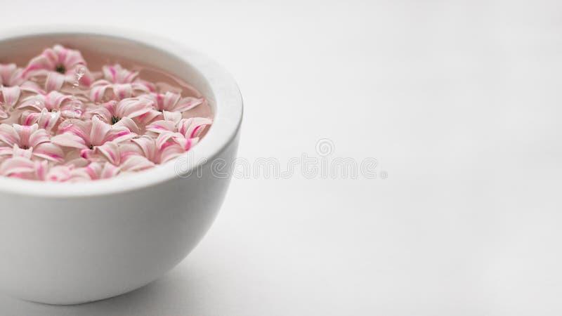 白色碗用与桃红色风信花花和水下跌的滴的水在白色空的背景的 与拷贝空间的横幅 免版税库存图片