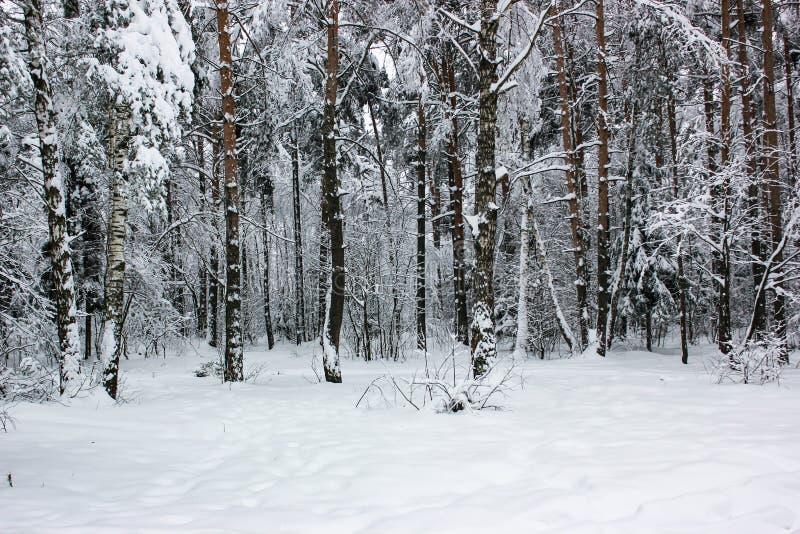 白色童话当中-冬天森林风景和雪- 6 免版税库存照片