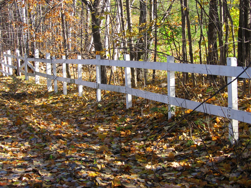 白色篱芭由木头制成在森林和路附近被盖叶子在秋天股票照片期间 免版税图库摄影