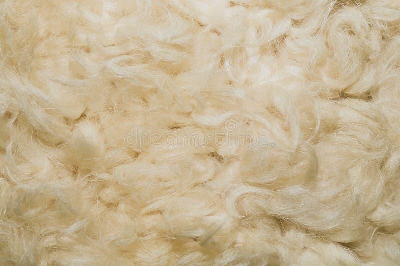白色粗野的毛皮纹理背景 米黄羊毛 免版税库存图片
