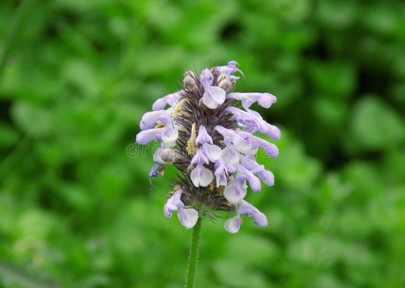 白色紫色花 免版税库存图片